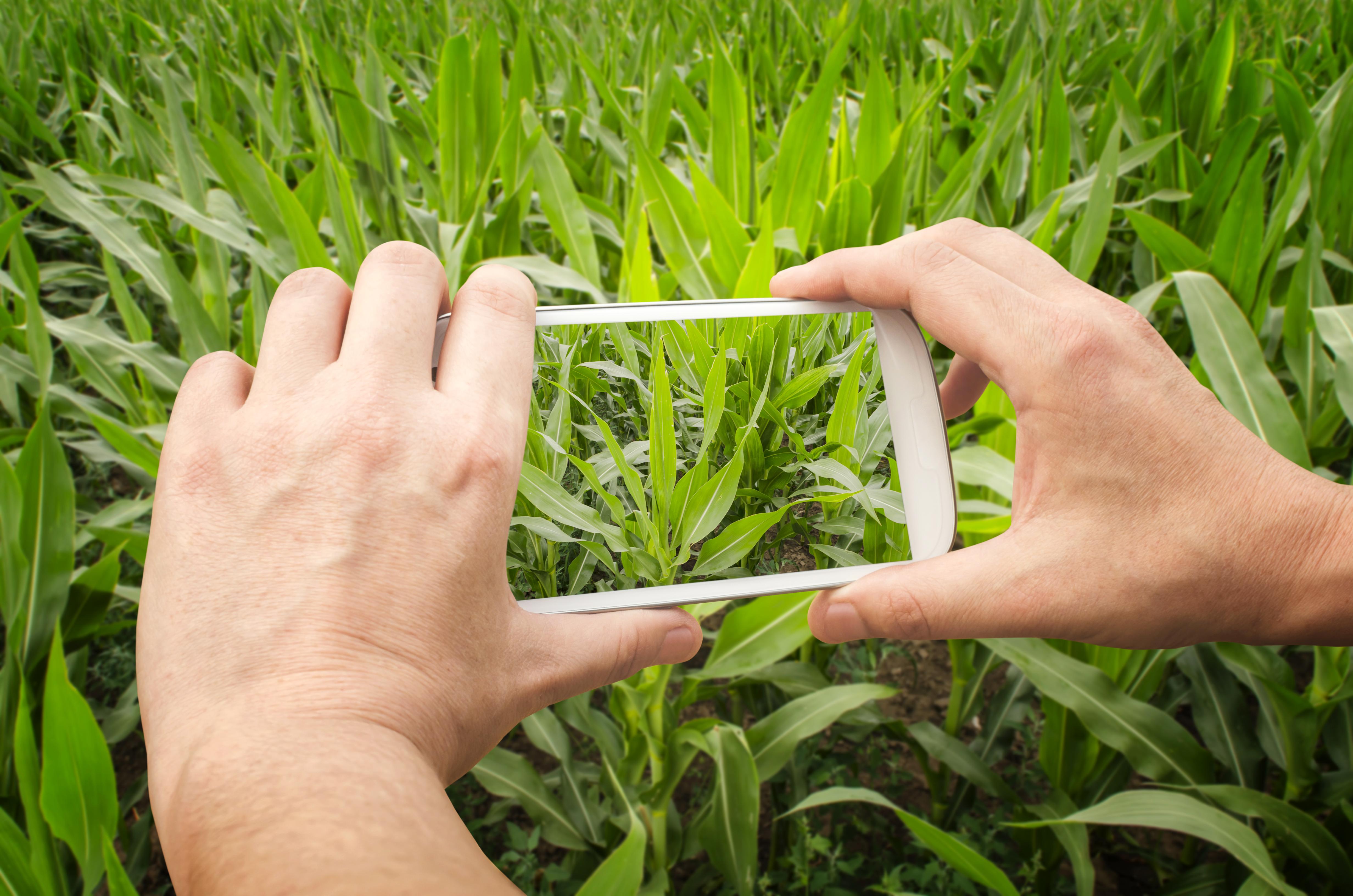 Formation pour les cadre de l'agriculture de demain Bac+3